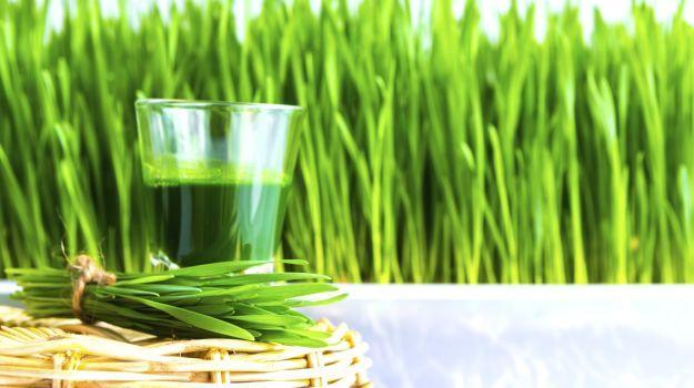 Resultado de imagen de fotos libre de derechos de autor hierba de trigo