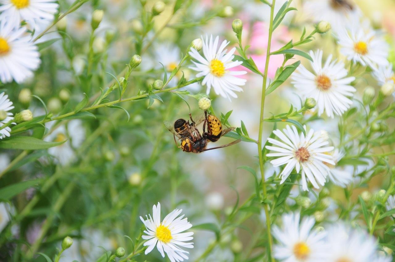 Come difendersi dalle punture di api, vespe e calabroni