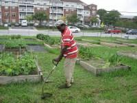 Cherry Hill Urban Garden  Farm Alliance of Baltimore