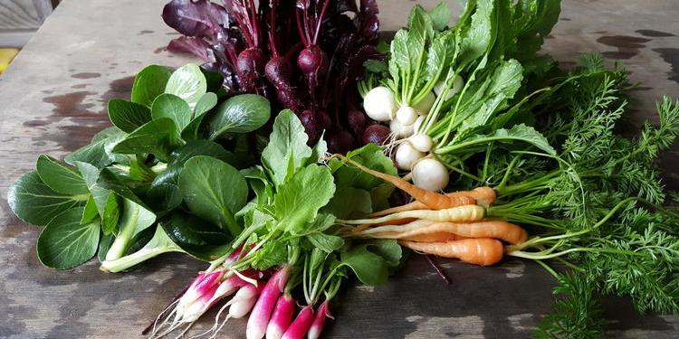 Hope for Baltimore's Flourishing Urban Agriculture Scene