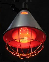 Heat Lamp - Poultry Heat Lamps and Bulbs Livestock Heat ...