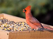 Wild bird perched on small animals feeder