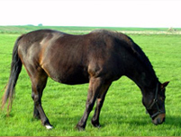spring horse turnout tips from Farmers Coop in Van Buren, Arkansas