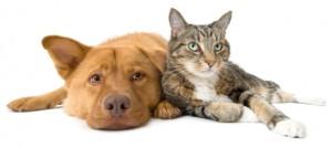 pet food department