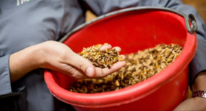 Horse Feed Nutrition