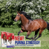 Horse Feeds With Gastric Support from Farmers Coop.