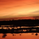 1O79 - Suzanne Nield - Sunrise over flood waters on outback plains