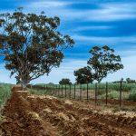 O025 - Spring Soil