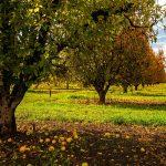 O030 - Apple Trees Farm in Donnybrook, WA