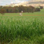 O031 - Dookie Crops