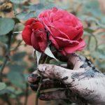 S009 - Soil is beauty, beauty is soil