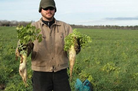 Daikon radish – commonly called tillage radish – can break up plow pans while adding organic matter. Photo Credit: USDA