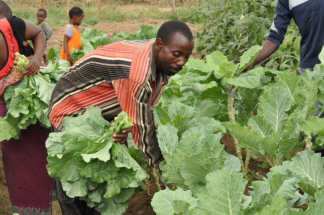 Refugees in Kenya are farming their way to success