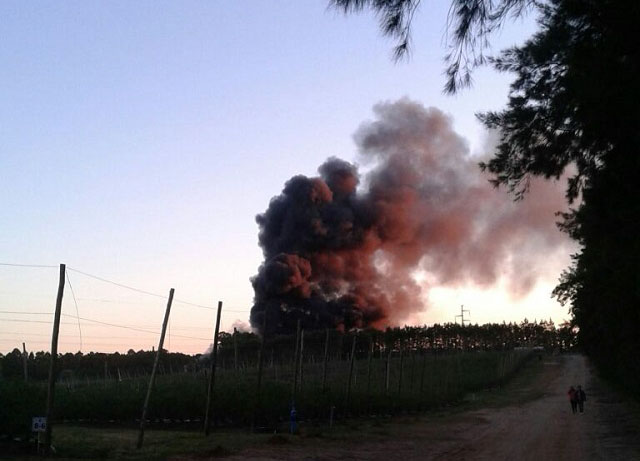 Fires in Israel no effect on fruit and vegetable industry