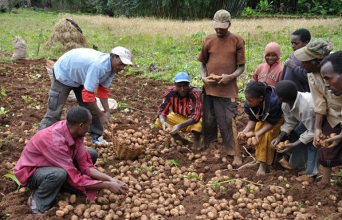 IFDC and Government of Ireland Launch New Potato Project in Kenya