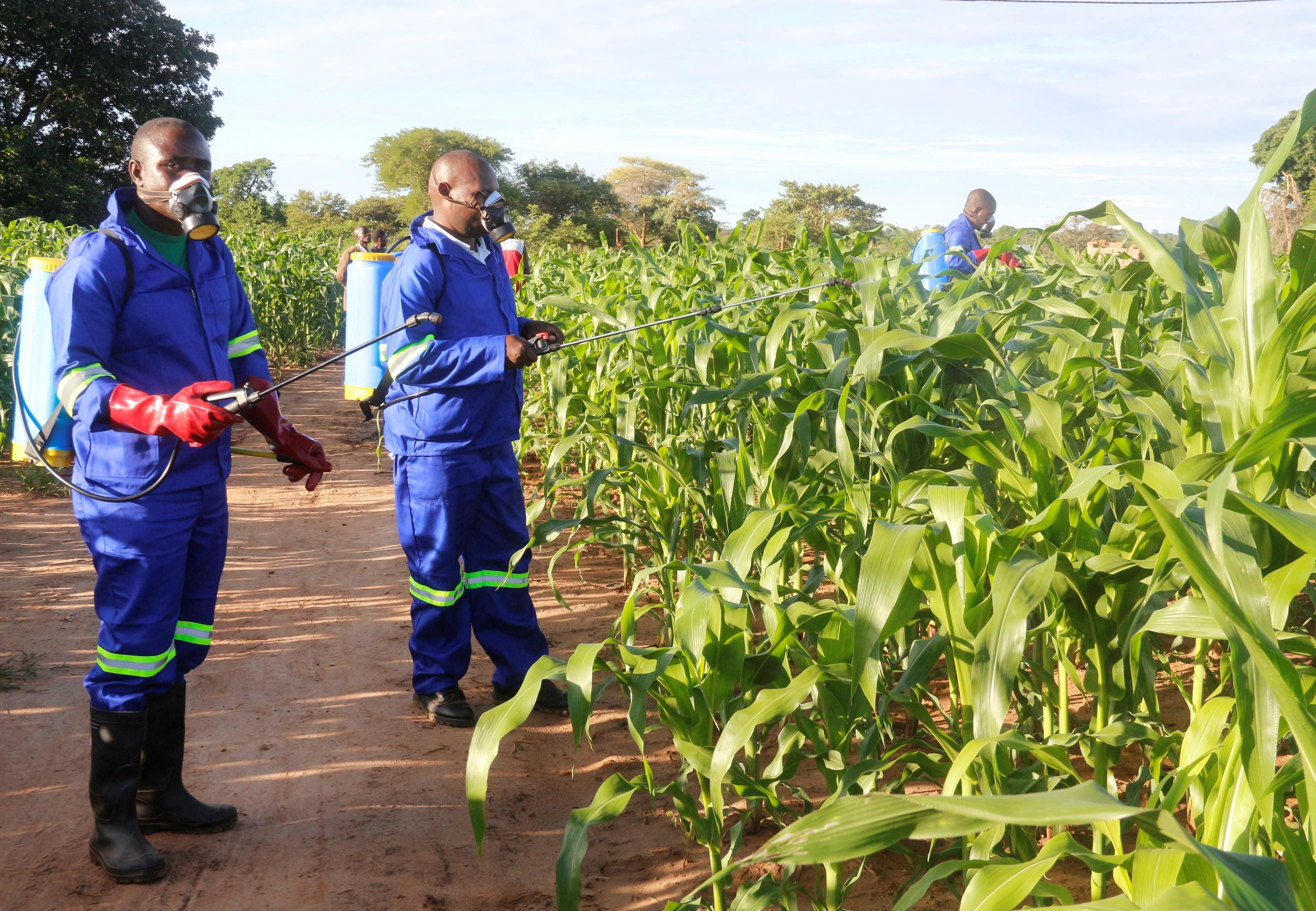 Emergency UN meeting in Harare over armyworm outbreak