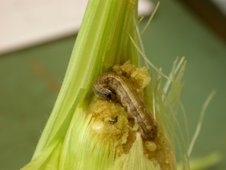 New information service to help farmers control pests