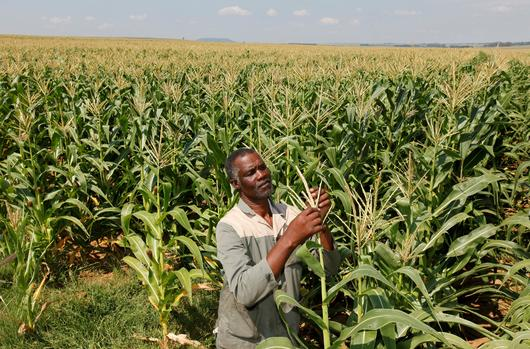 Kenyan shortage of grain critical