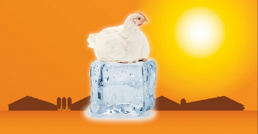 Sprinkler systems enhance cool cell performance in poultry houses