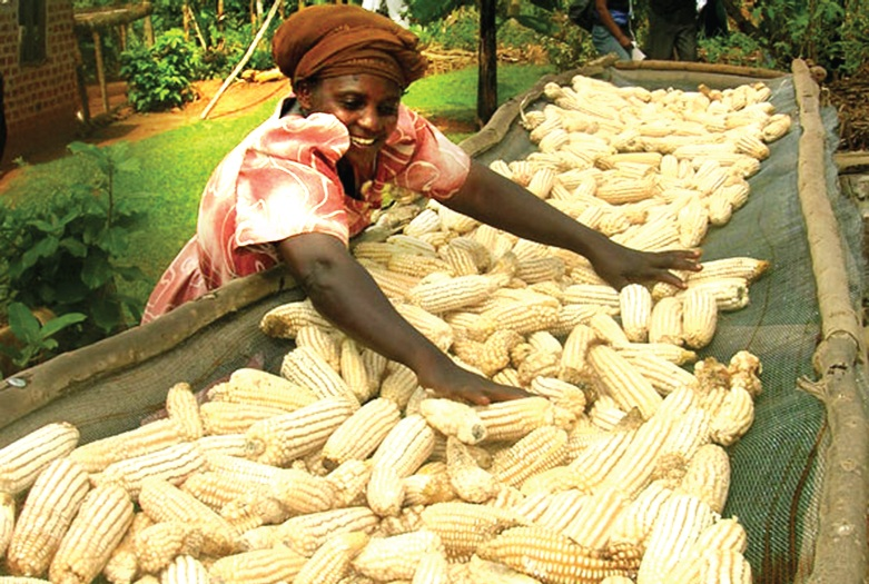 Kenya to convene forum on measures to boost maize production