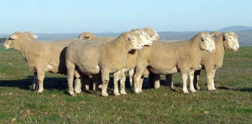 Better year ahead for Eastern Cape  farmers