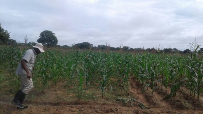 African Markets Might Look to South Africa for Additional Maize Supplies