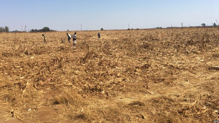 Zimbabwe: Vast tracks of land lying idle