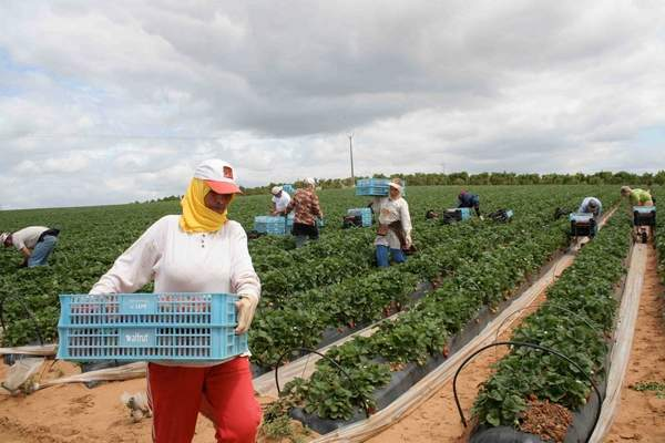 Morocco to host 2018 edition of 'African Women in Agriculture' conference