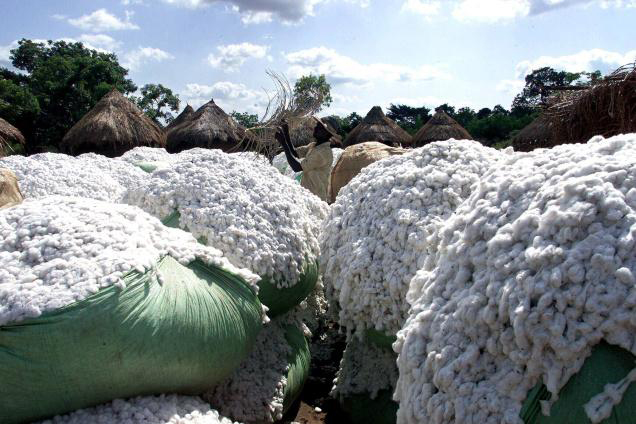 Zimbabwe cotton farmers to be paid an export incentive of 10%