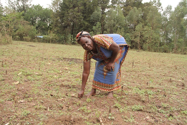 Kenyan farmers tackle poor soils, low yields with conservation agriculture