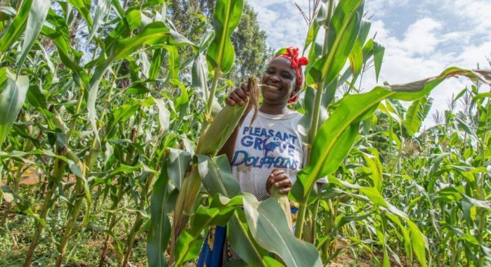 Kenyan agricultural experts call for the implementation of GMO seeds as a way to combat fall army worm