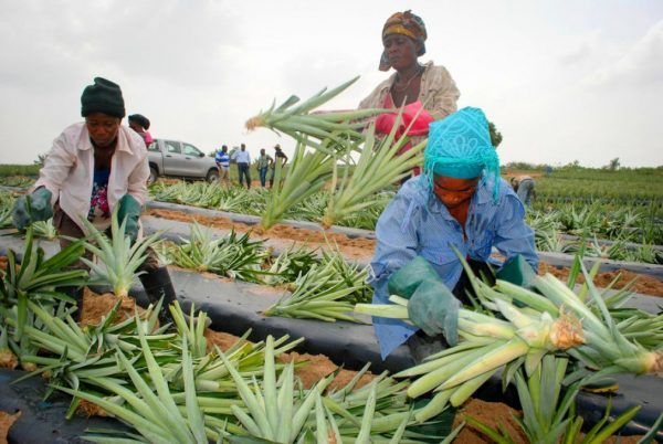 OCP Africa launches Agribooster program in Ghana