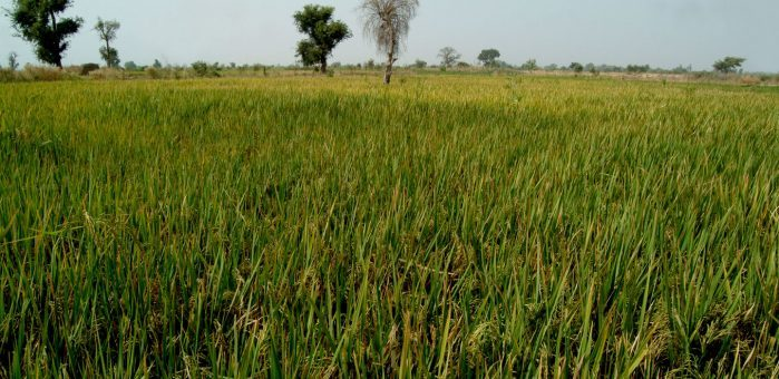 IFAD and the Lab launch new partnership to drive finance to African smallholder farmers combating climate change