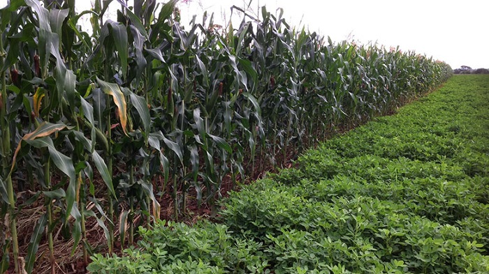 Indian investor to pumps US $200m in Zimbabwe's agricultural sector