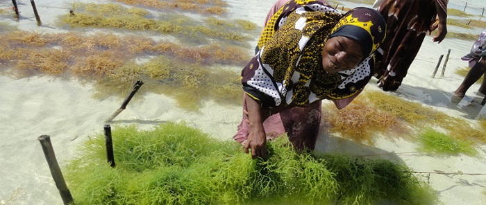Tanzanian government looking to promote seaweed farming in the country
