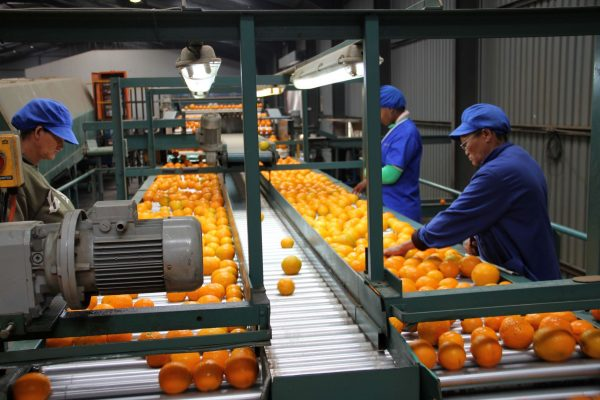 South African citrus producer bumps up production by 40% in one year