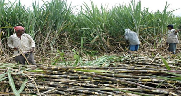 Farmers declare sugar zoning illegal unless given waiver by competition authority