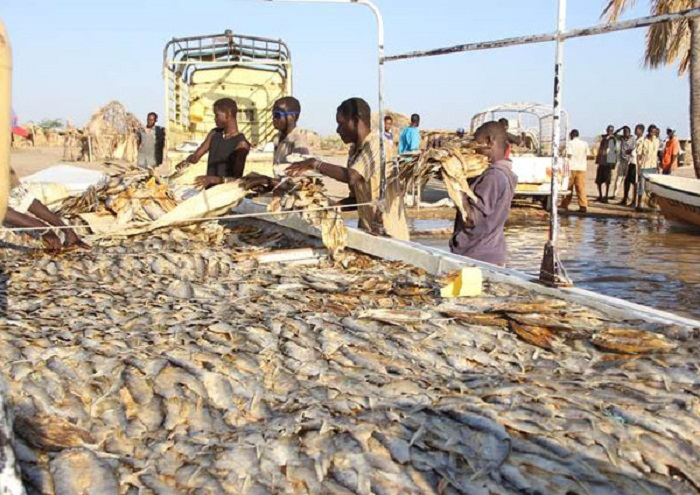 Kenyan government lifts ban on fish imports