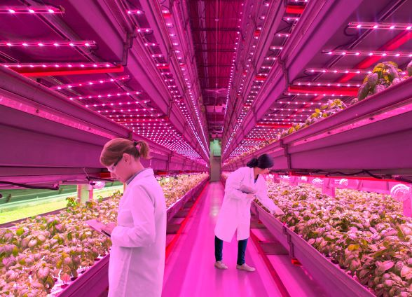Harvesting new opportunities with LED based Horticulture Lighting