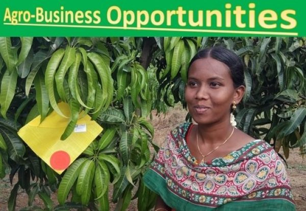 The Untold Secrets of Investing in Agribusiness