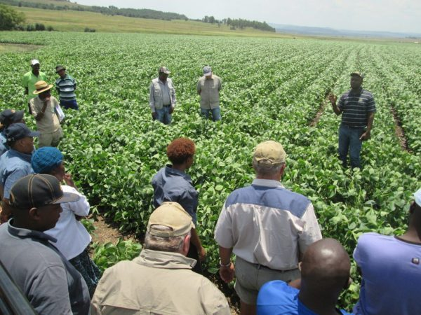Access to finance, training and entrepreneurship critical to building  SA's black farming community