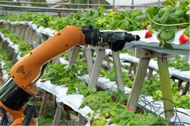 Global IoT in Agriculture Market to grow 14.5% CAGR by 2025