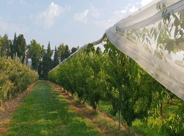 Arrigoni presents protecta Ultra®,The new solution for kiwifruit, cherries and berries