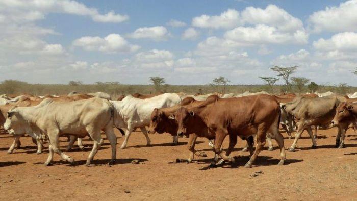 Drought-stricken Kenyan livestock farmers to receive US $2.88m