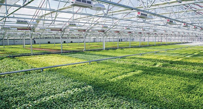 Global Indoor Farming Technology Market is projected to reach $12.02 Billion by 2024 according to a new research report