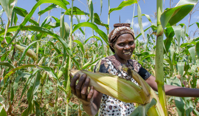 Opportunities in African Food and Agriculture