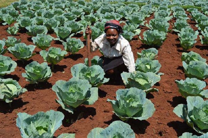 Kenyan farmers urged to plant more during the short rains