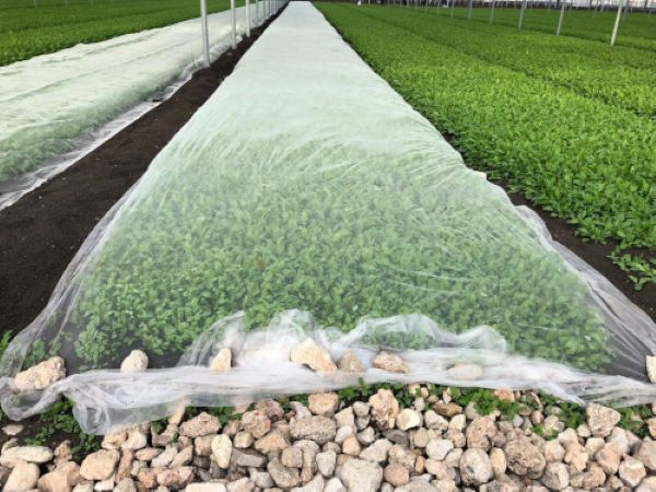 "Protection of organic crops, Arrigoni screens pass the tests on ""Baby Leaf"""