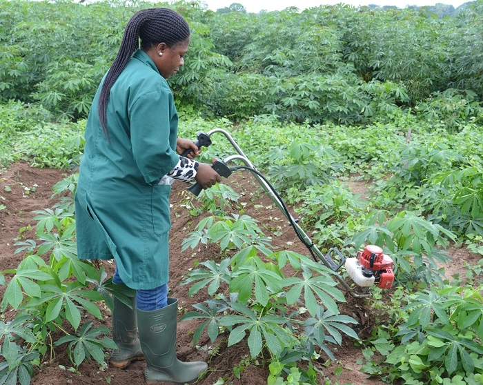 Contract farming in Kenya