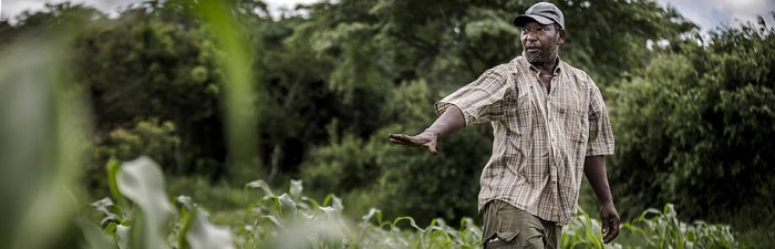 COVID-19: FAO and African Union commit to safeguarding food security amid crisis
